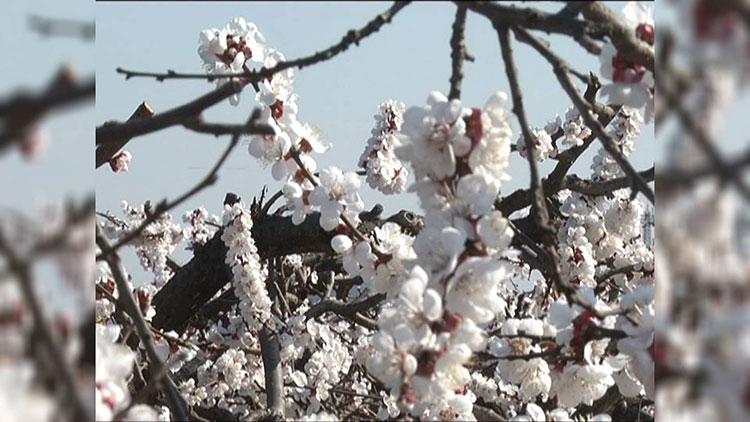 35秒|三月踏青好去处!邹城玉皇山三千亩杏花盛开春意浓