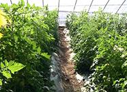 质量兴农绿色兴农,德州投入500万元推广可降解地膜