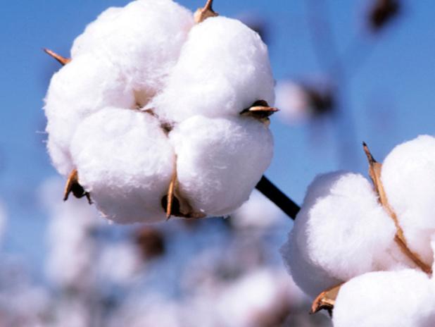 2018年山东棉花、花生适宜始播期较常年略偏早