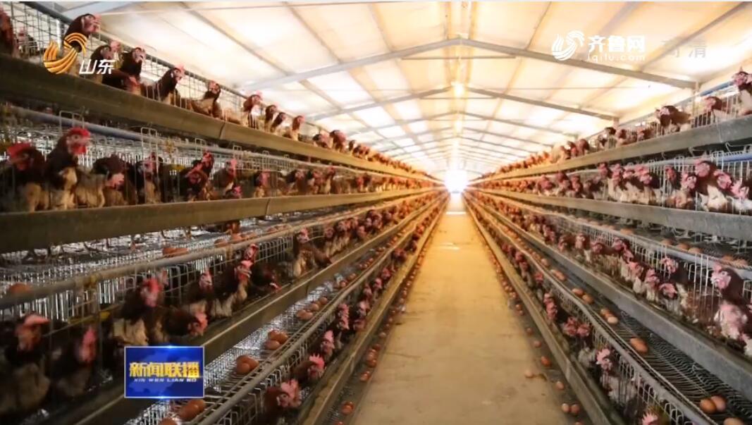 环保督察整改再落实|山东:疏堵结合 化解畜禽养殖污染