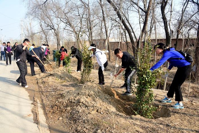 茌平:春来种树忙 贫困村街道环境大变样(图)