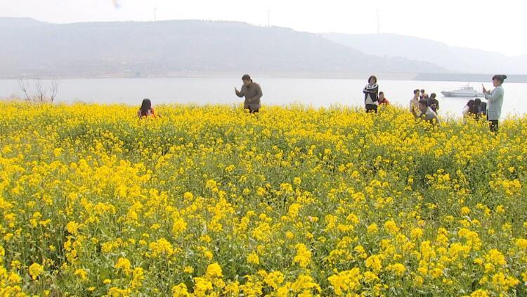 枣庄一水库岸边花儿竞相开放 听潺潺水声尽享春光