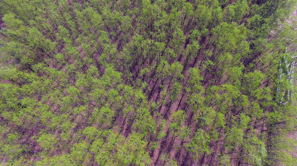 飞吧山东|济西国家湿地披绿衣,十里春风踏春正当时