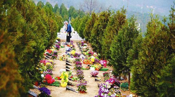 淄博推广节地生态安葬 覆盖城乡群众点赞