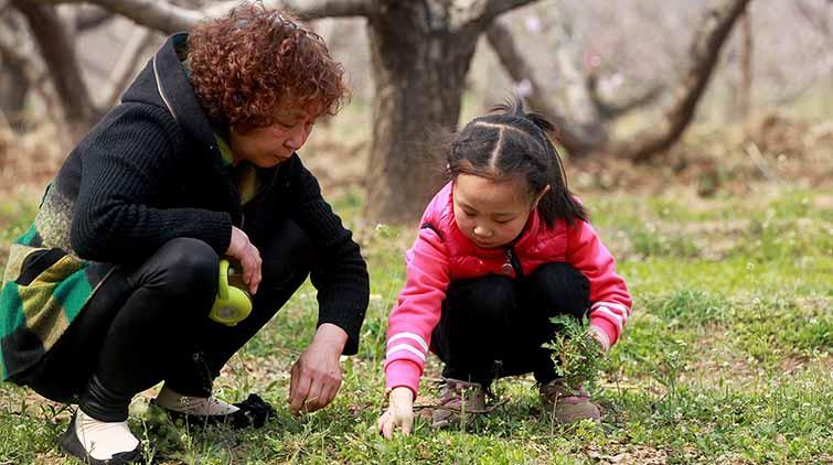 挖野菜享受春日时光,要食用需注意这些问题