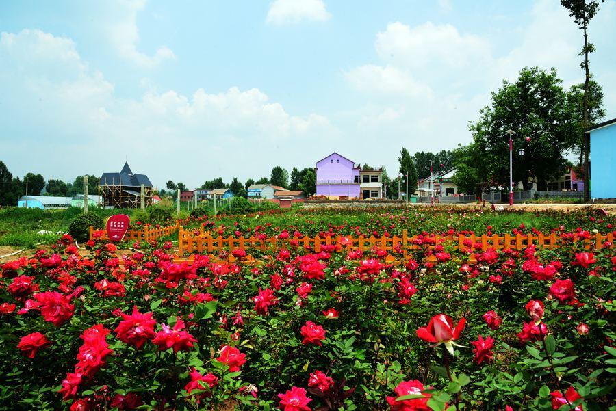 单县首届长寿文化节分会场暨时楼镇首届美丽乡村旅游节即将开幕