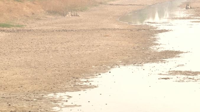 56秒|滨州部分村庄小麦大面积干枯 周围无水可用