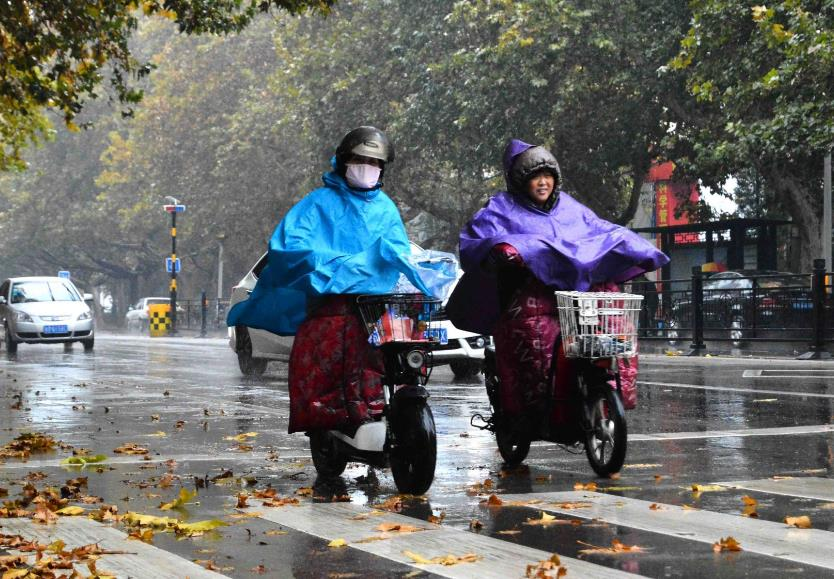 山东:农业部门积极应对大风降雨降温天气