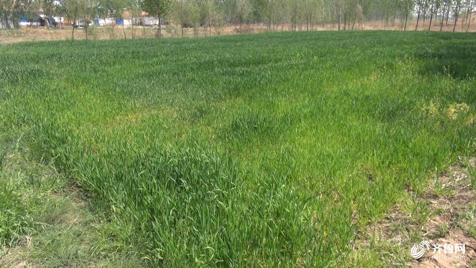壁纸 草 成片种植 风景 绿色 植物 种植基地 桌面 1586_892