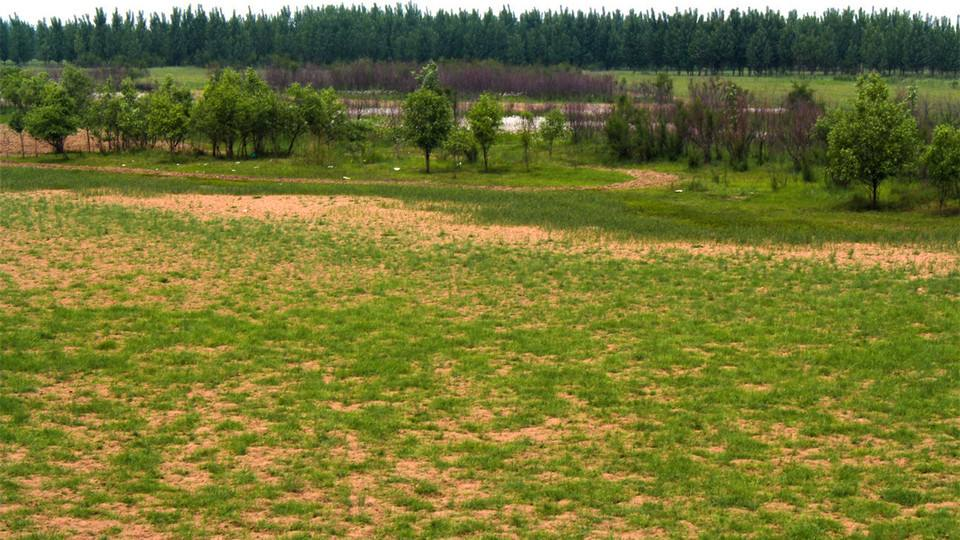 山东黄河滩区将打造成千里黄河绿色高效农业长廊
