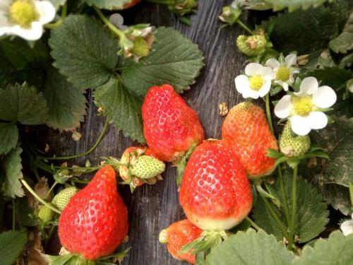沂源探索农产品产销新模式 小农户抱团勇闯大市场