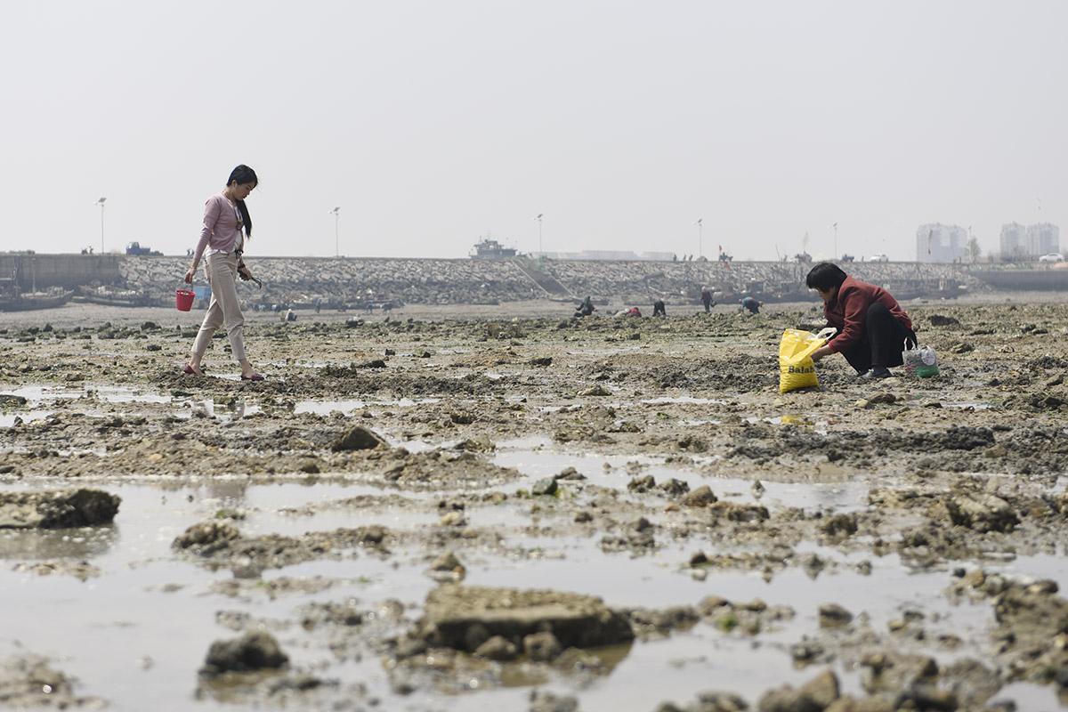 五一节假日照赶海 游客亲自挖蛤蜊一挖一麻袋