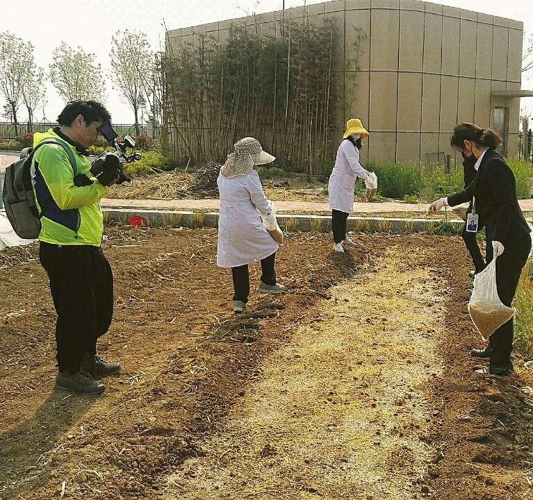1000份海水稻材料在青岛开始播种  预计5月底插秧