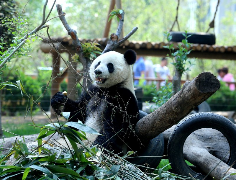 萌宠撒欢加杂技表演 济南动物园迎亲子游大潮