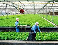 关于农业新旧动能转换 山东将重点从这六点入手