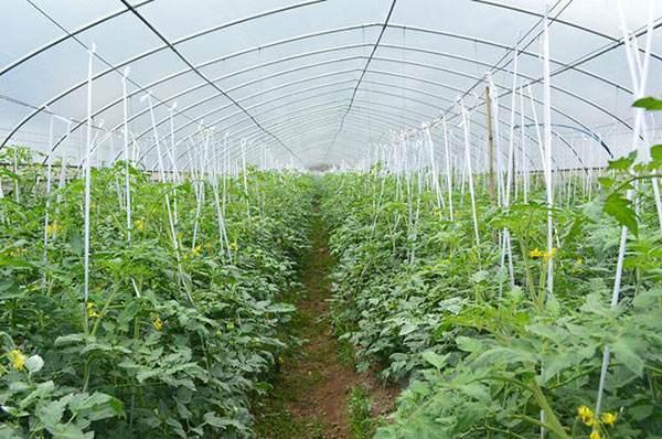 聊城9家农场入选第三批家庭农场省级示范场