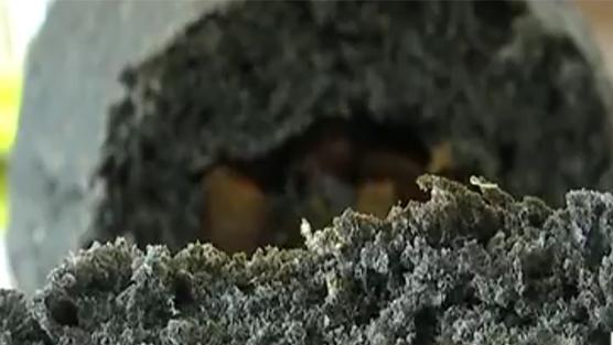 竹炭食品能排出身体毒素?专家:纯属无稽之谈