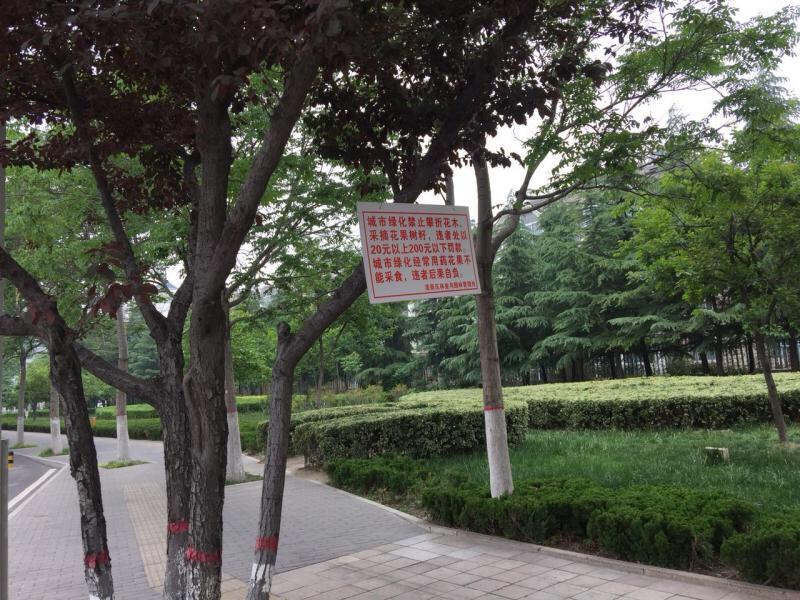 """淄博:200块宣传牌提醒市民莫摘""""紫叶李果"""""""