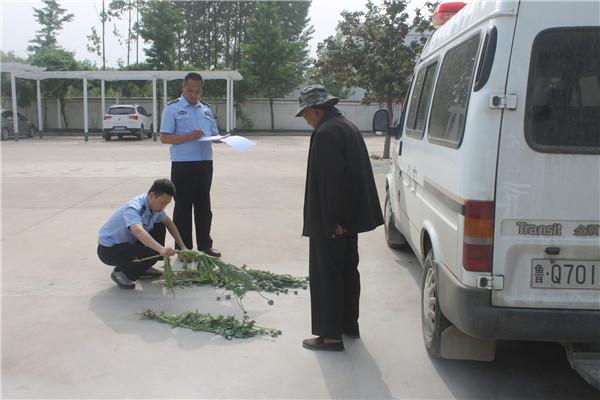 糊涂!平邑7旬老人为赏花自家门前种植罂粟