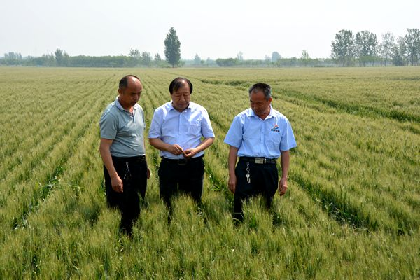 郓城:全国供销系统劳动模范闫成钦 创新模式为农当好土地管家
