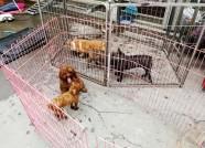 """潍坊:楼下宠物狗从早叫到晚 沿街住户直称""""受不了"""""""