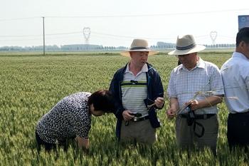 农业部来山东督导小麦重大病虫防控工作