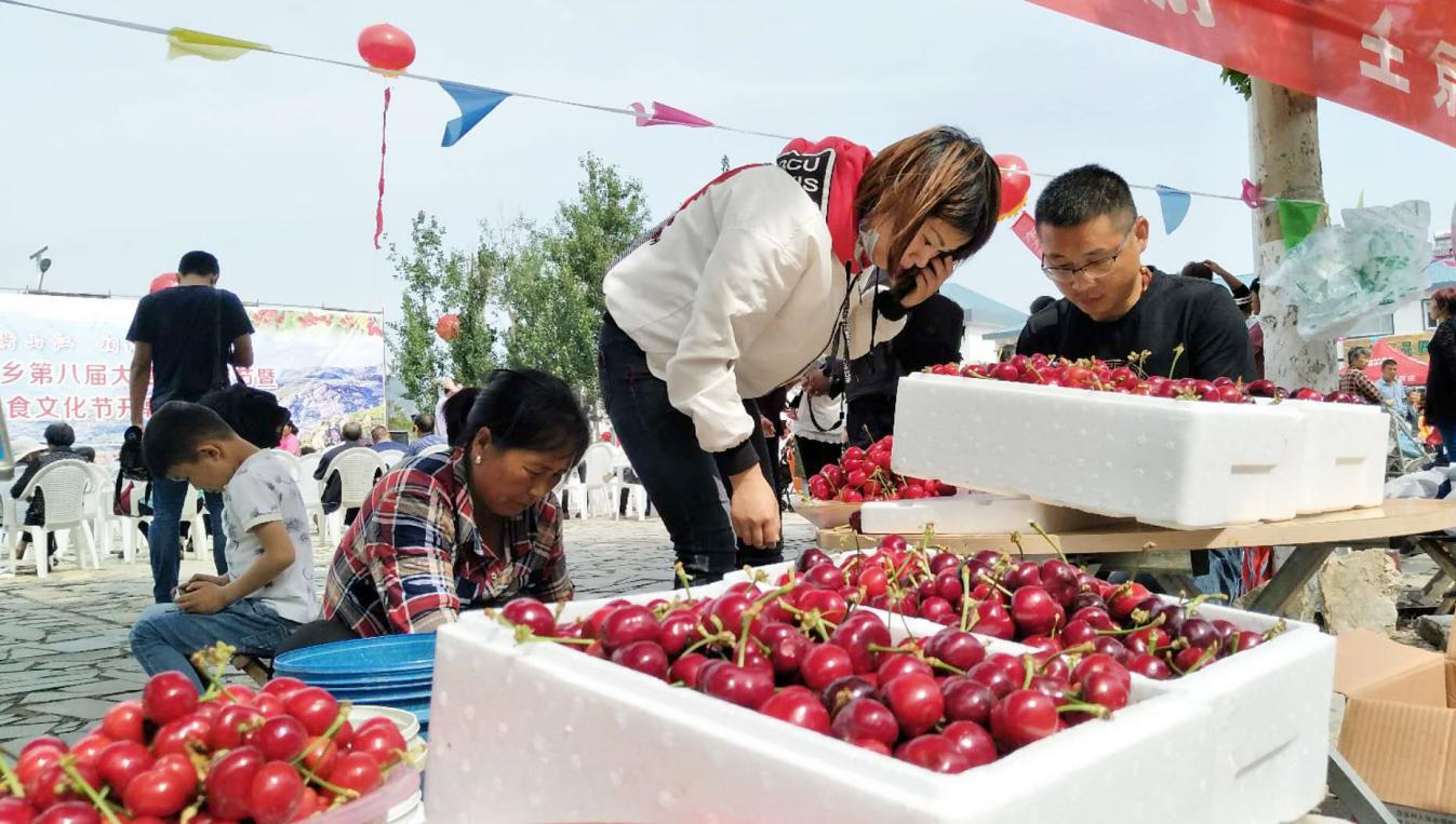 临沂:一颗红樱桃 火了大田庄