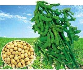 第七届山东省农作物品种审定委员会成立