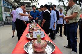 小村庄办起文化节 临沂洋葱擂台赛吸引260余名选手参赛