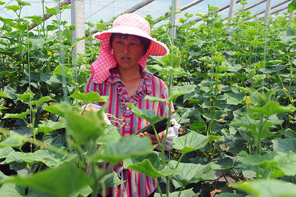 沂源:以土地流转加快农业产业发展 助力乡村振兴