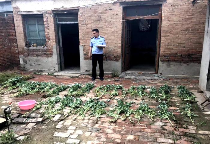 茌平公安查处6处罂粟种植点 共铲除罂粟114株