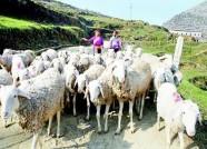 定了!推进畜牧业转型升级绿色发展 潍坊准备要这么干