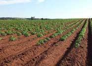 无棣法院执行和解一起农业土地承包合同纠纷案
