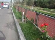 滨州两男子盗窃绿化带月季 被警方行政拘留五日