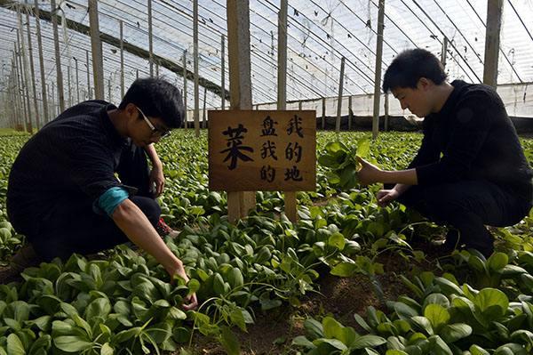 山东农药用量连续三年下降 亩均减少20%以上