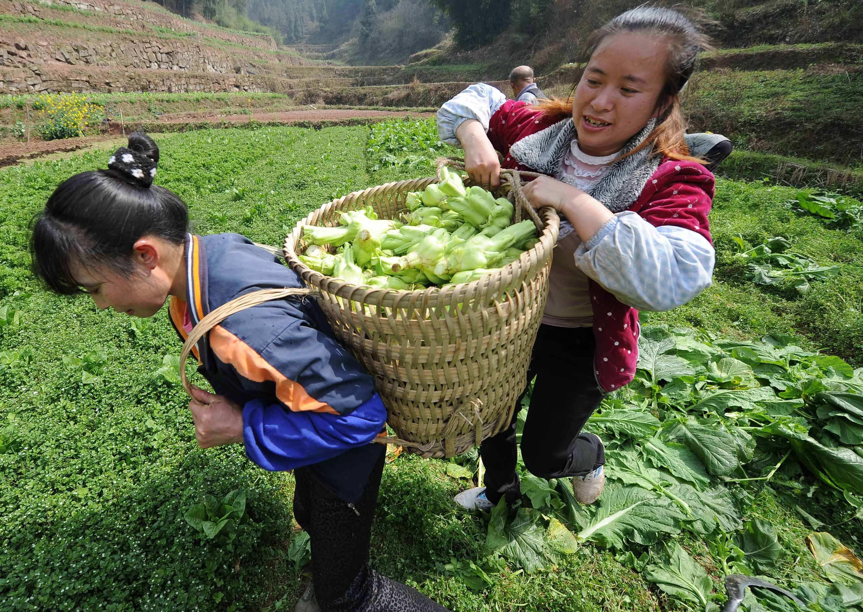 山东公布第三批家庭农场省级示范场 济南12家
