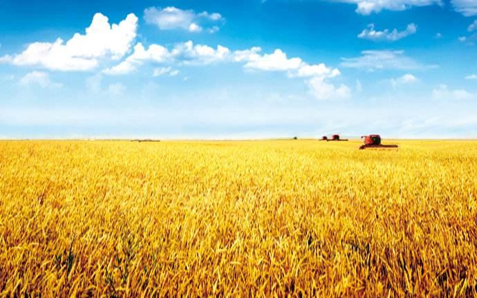 到2020年,山东粮食综合生产能力将达到5000万吨