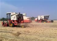 夏粮收获面积超过494万亩 潍坊为保夏粮丰收做了这些事