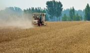 海丽气象吧|未来一周淄博部分时段有雷雨 农户麦收应及时