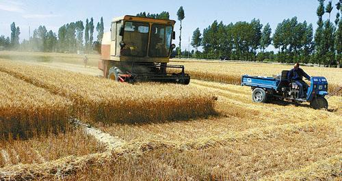 山东鲁西南鲁南开始收割小麦 病虫危害基本结束