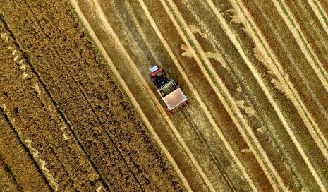 """(组图)""""鲁南粮仓""""90万亩小麦开镰 一幅幅美丽画卷"""