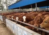 """国家级示范园区都有了!潍坊畜禽养殖污染防治有哪些""""高招""""?"""
