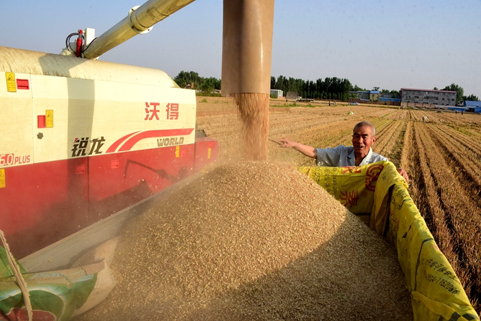 芒种时节麦收大片来袭!聊城各地麦收工作陆续展开