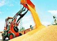 备足贷款5亿元、腾空仓容百万吨 潍坊今年夏粮收购准备这么干