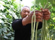 """乡村振兴看泰安丨泰安满庄镇滩清湾村:大棚里的农户个个都是""""小老板"""""""