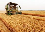 小麦如何卖出好价钱?潍坊粮食专家为您支招