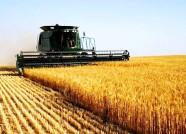 潍坊机收小麦面积突破82万亩 明日降雨有利也有弊