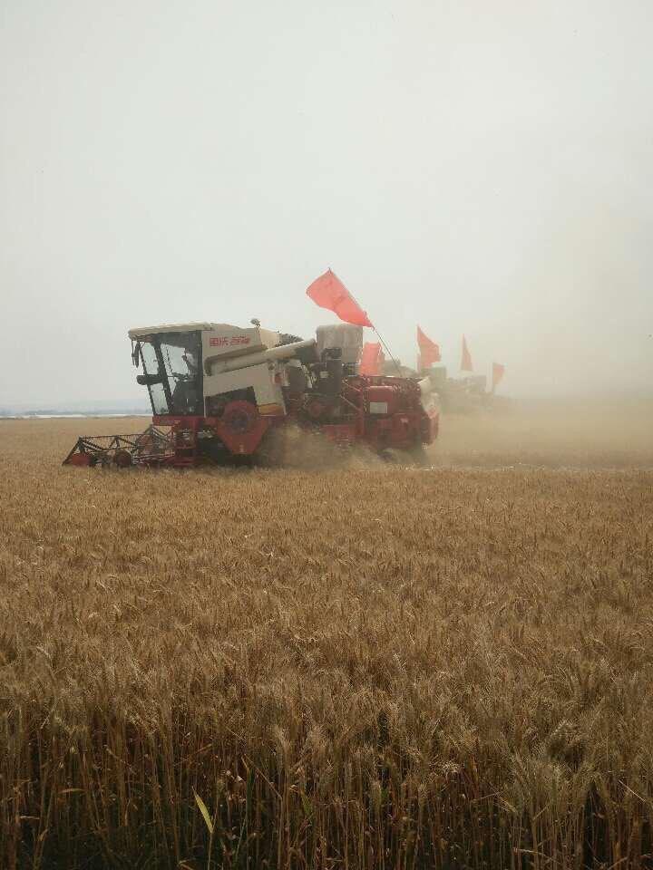 山东小麦收获进入高峰,收获近六成