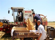 1天投入1万台联合收割机 潍坊麦收进度过半
