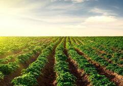 山东:开展农业生产托管服务 2017综合托管率近20%